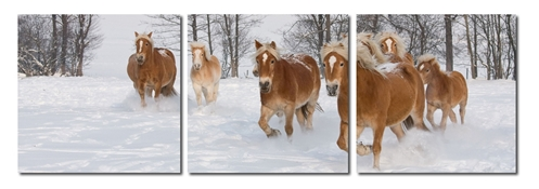 Baxton Studio Horse Herd Mounted Photography Print Triptych Horse Herd Mounted Photography Print Triptych, VC-2050ABCcompare Horse Herd Mounted Photography Print Triptych, best price onHorse Herd Mounted Photography Print Triptych, discount Horse Herd Mounted Photography Print Triptych, cheap Horse Herd Mounted Photography Print Triptych